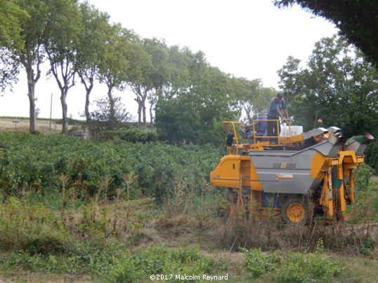 Vendanges in the Herault